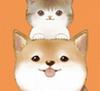 猫狗翻译通 v1.0.0